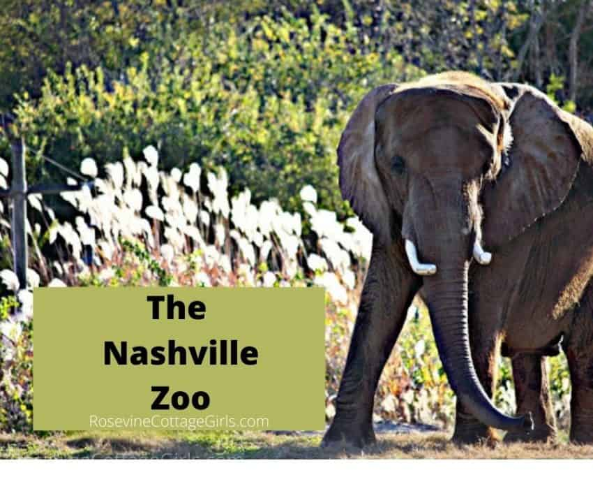 Image of an elephant at the Nashville Zoo by rosevinecottagegirls.com