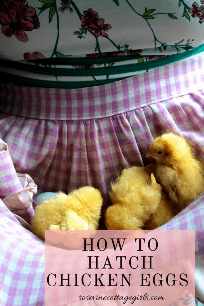 how to hatch chicken eggs the ultimate guide