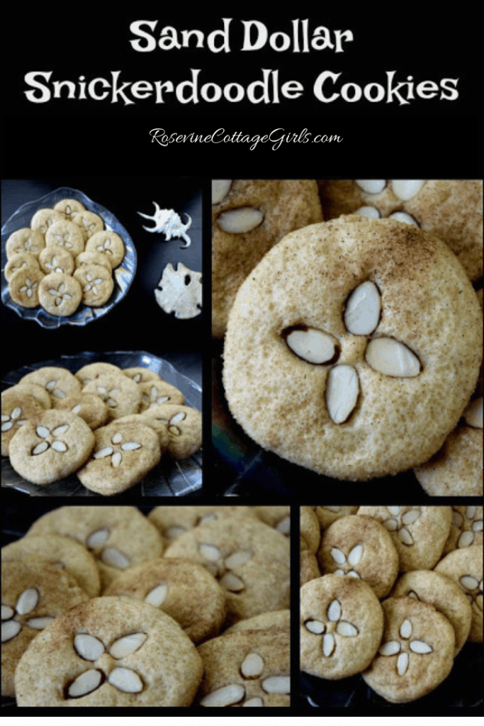 Collage of sand dollar cookies / snickerdoodles | rosevinecottagegirls.com |Sand Dollar Cookies, Sand Dollar Cookie Recipe, Sand Dollar Snickerdoodles, by Rosevine Cottage Girls