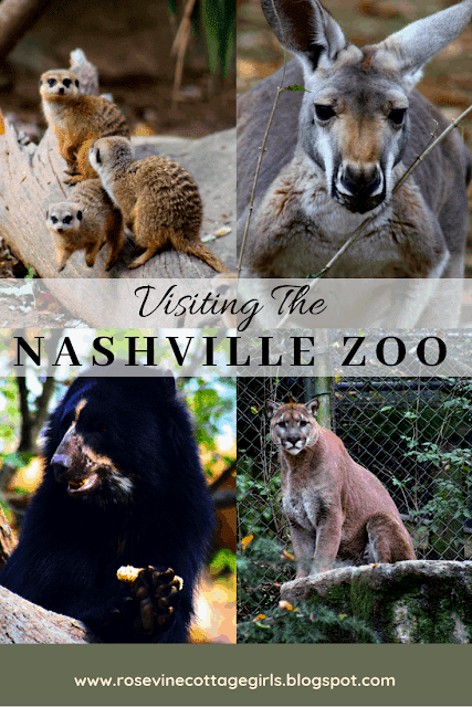 Visiting the Nashville Zoo, Nashville Zoo, Tennessee Zoo in Nashville, Nashville Zoo at Grassmere Travel Tennessee by Rosevine Cottage Girls