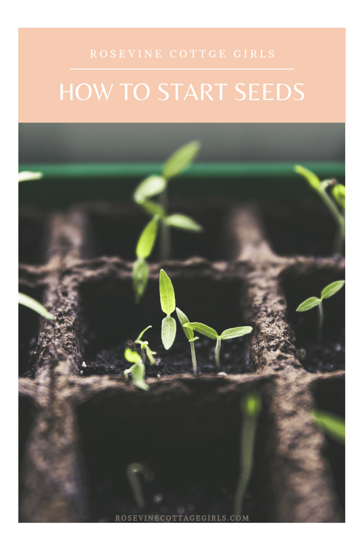 Seedlings in pots  how to start seeds for your garden #rosevinecottagegirls