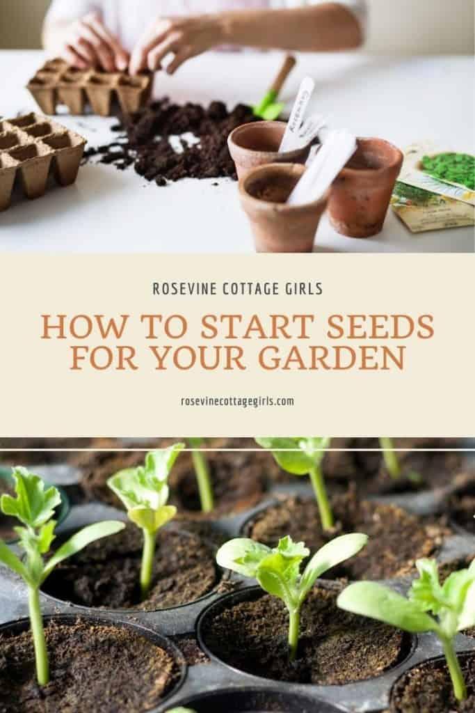 Seedlings | How to start seeds for beginners