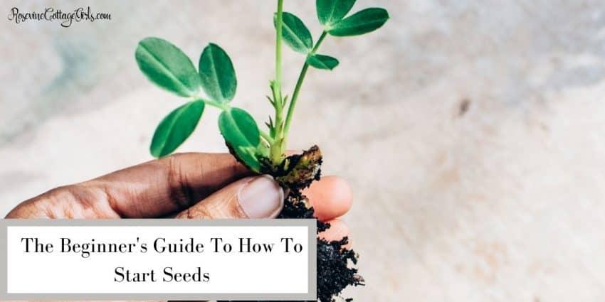 holding seedlings | How to start seeds for beginners