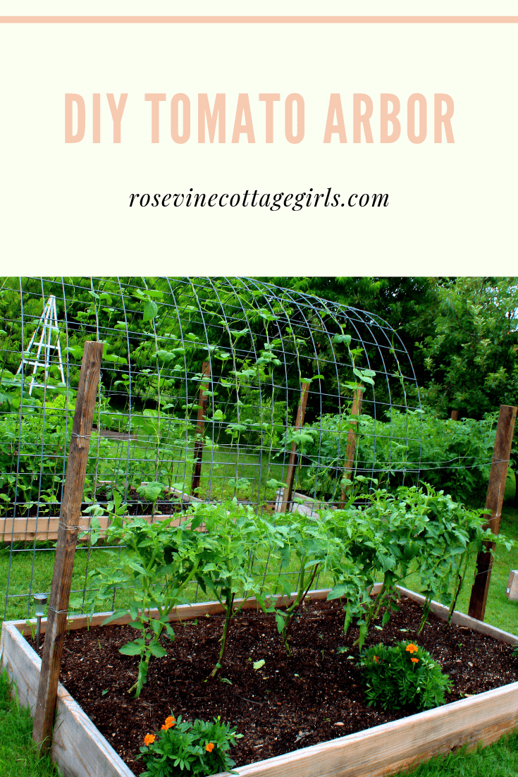Tomatoes in a raised bed on a diy tomato cage #rosevinecottagegirls