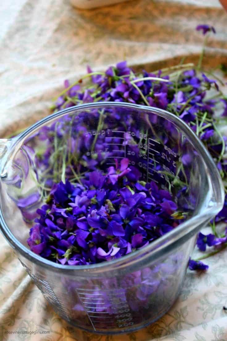 How To Make Wild Violets Syrup