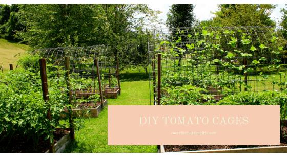 How To Make Tomato arbors