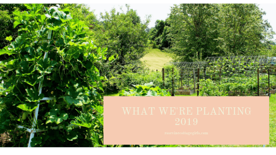 What we are planting in our raised bed garden in 2019