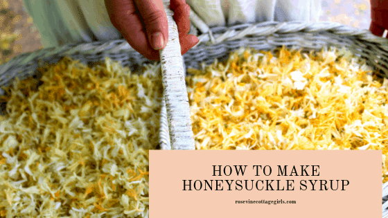 Honeysuckle syrup is like a yummy taste of summer! This syrup is super easy to make, with delicious flavor and honey color