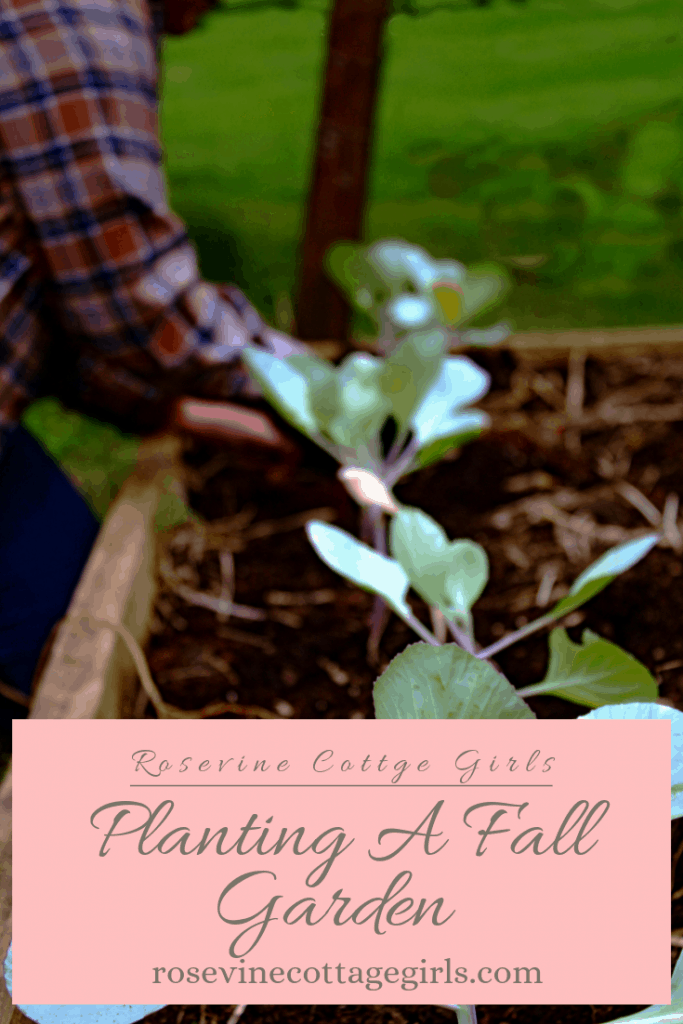 How to planting an amazing fall garden to feed your family and deciding on the best plants for your fall garden