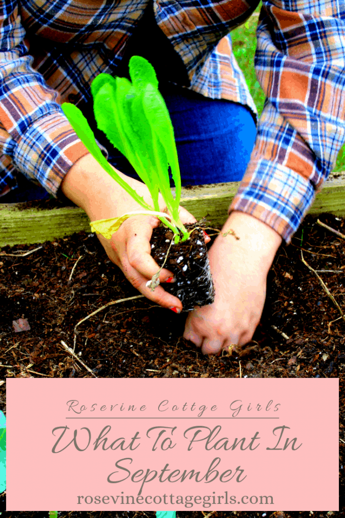 What To Plant In September For A Fall Garden #RosevineCottageGirls