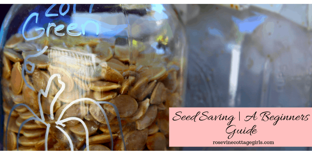 Seed saving a beginners guide