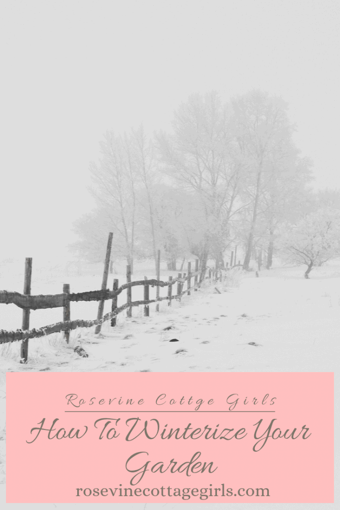 How to winterize your garden + end of season garden care #RosevineCottageGirls