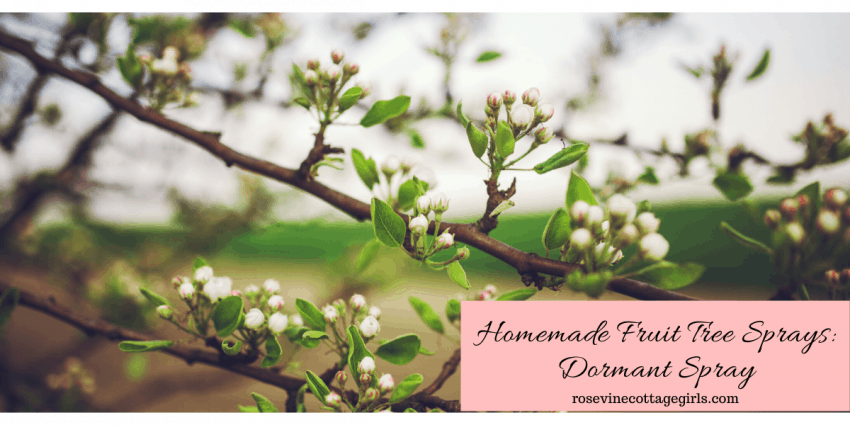 homemade dormant oil and fruit tree spray for your orchard