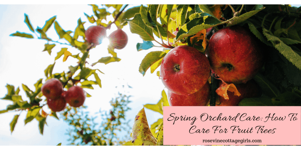 Spring orchard care: How to care for fruit trees #rosevinecottagegirls