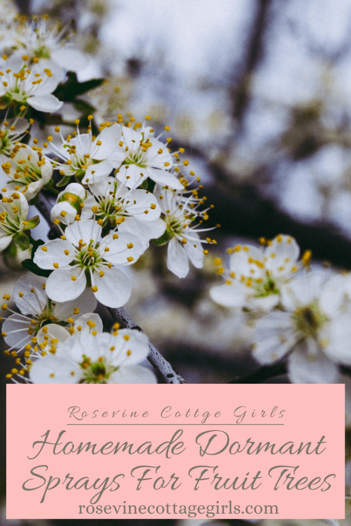 How to make homemade fruit tree sprays: dormant spray #rosevinecottagegirls