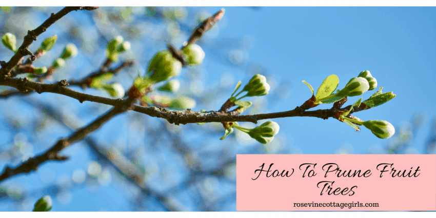 How to prune fruit trees for a healthier tree and better harvest