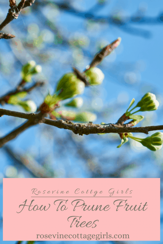 how to prune fruit trees to promote a better harvest #orchardcare #rosevinecottagegirls