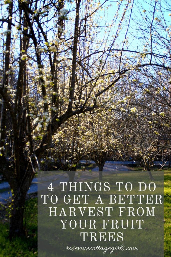 How to care for fruit trees 4 ways to promote a better harvest this year #rosevinecottagegirls
