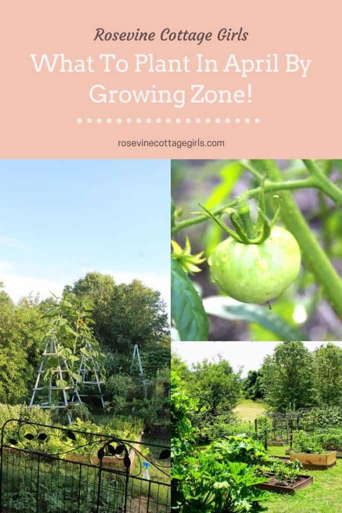 What to plant in April for a spring garden by planting zones 3-10 #rosevinecottagegirls