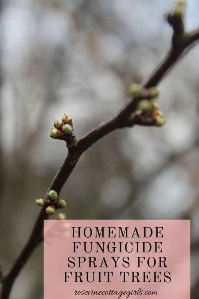 How to make homemade organic fungicide sprays for fruit trees out of ingredients in your house.