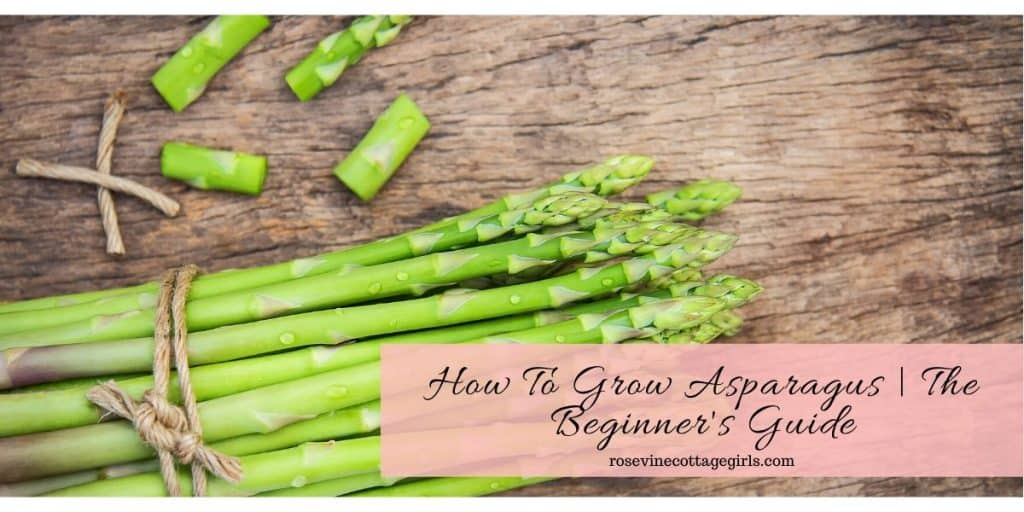 How to grow asparagus for beginners #rosevinecottagegirls