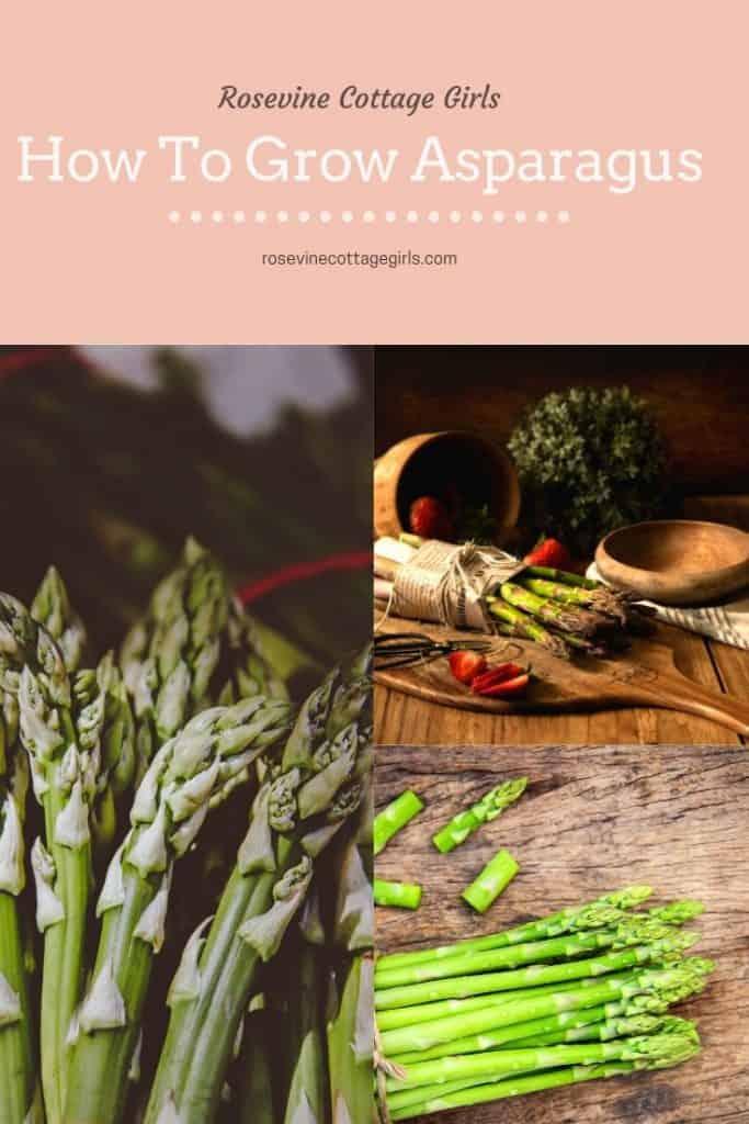 How to grow asparagus for beginners #rosevinecottagegirls