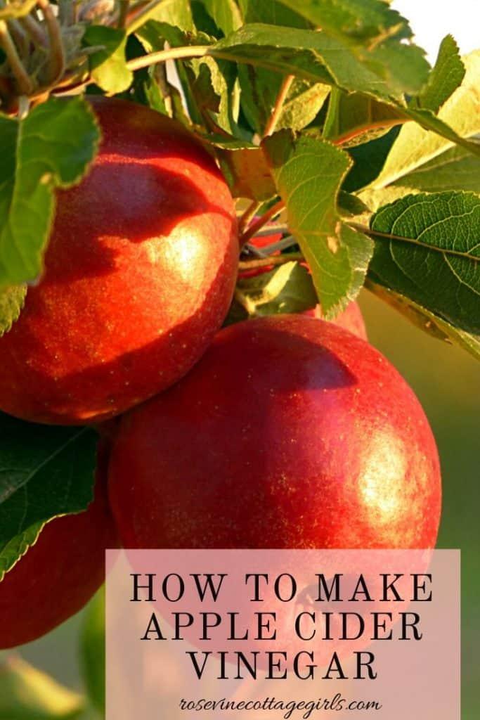 how to make apple cider vinegar out of apple peels #rosevinecottagegirls