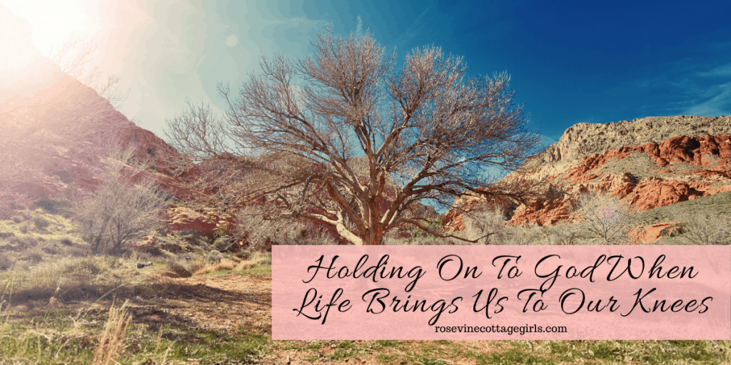 Dead tree and dried ground | Holding On To God When Life Brings You To Your Knees
