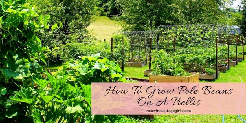Veggie garden with raised beds and arbors | How To Grow Pole Beans On A Trellis