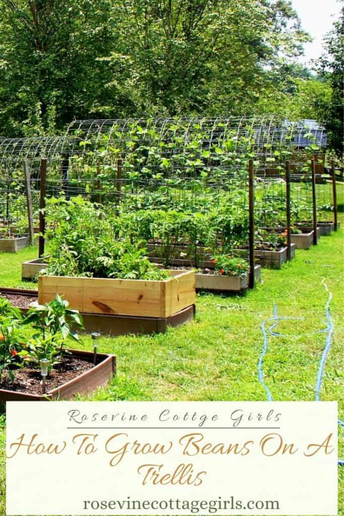 Raised beds with arbors | How To Grow Pole Beans On A Trellis #rosevinecottagegirls