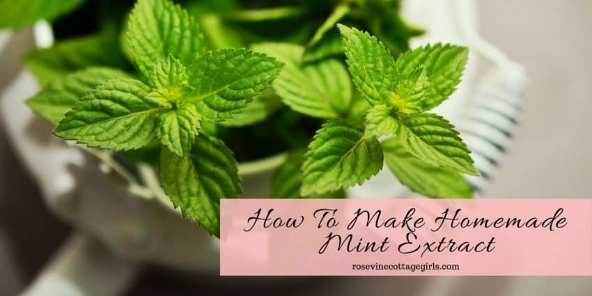 Mint in a white bowl | Homemade mint extract recipe