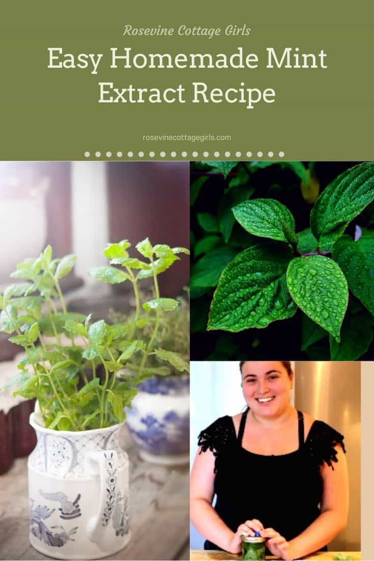 Mint, mint in a jar, mint extract | Easy homemade mint extract recipe
