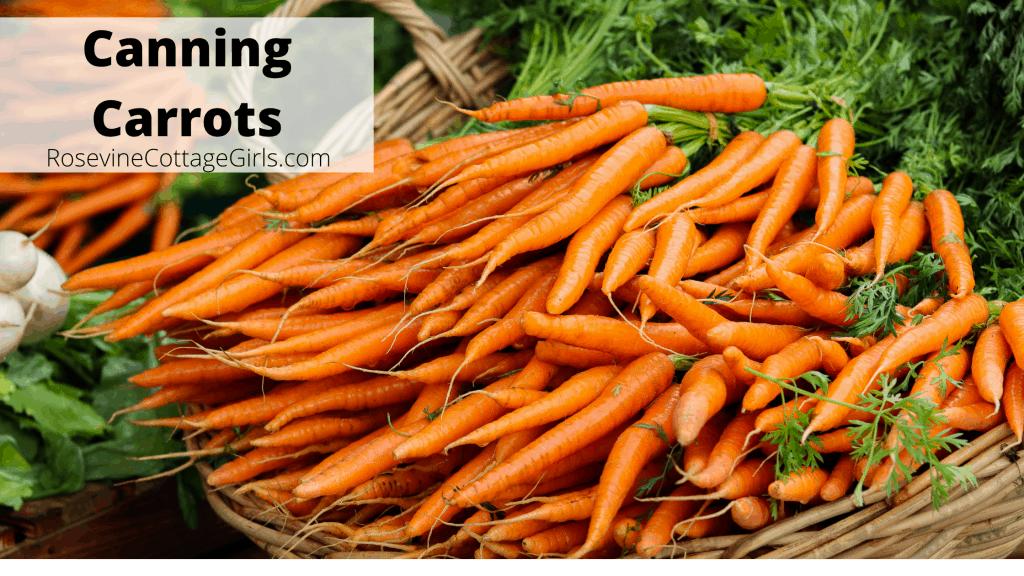 Photo of a huge basket of fresh carrots | text Canning Carrots | rosevinecottagegirls.com
