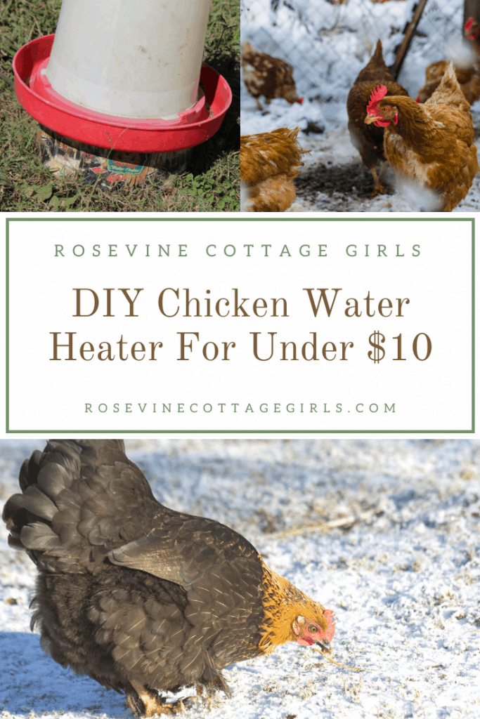 Chickens in the snow and a chicken waterer | How to DIY a chicken water heater for under 10 to keep your waterers from freezing this winter