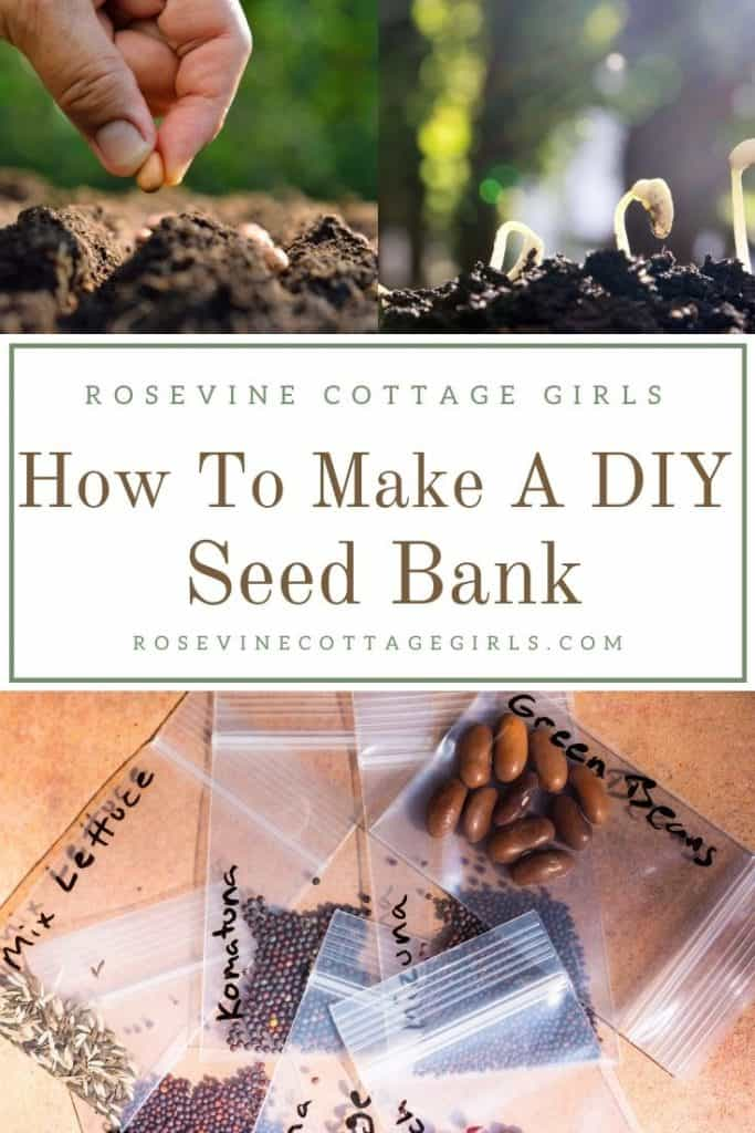 Seeds | How to make a custom DIY seed bank for emergencies