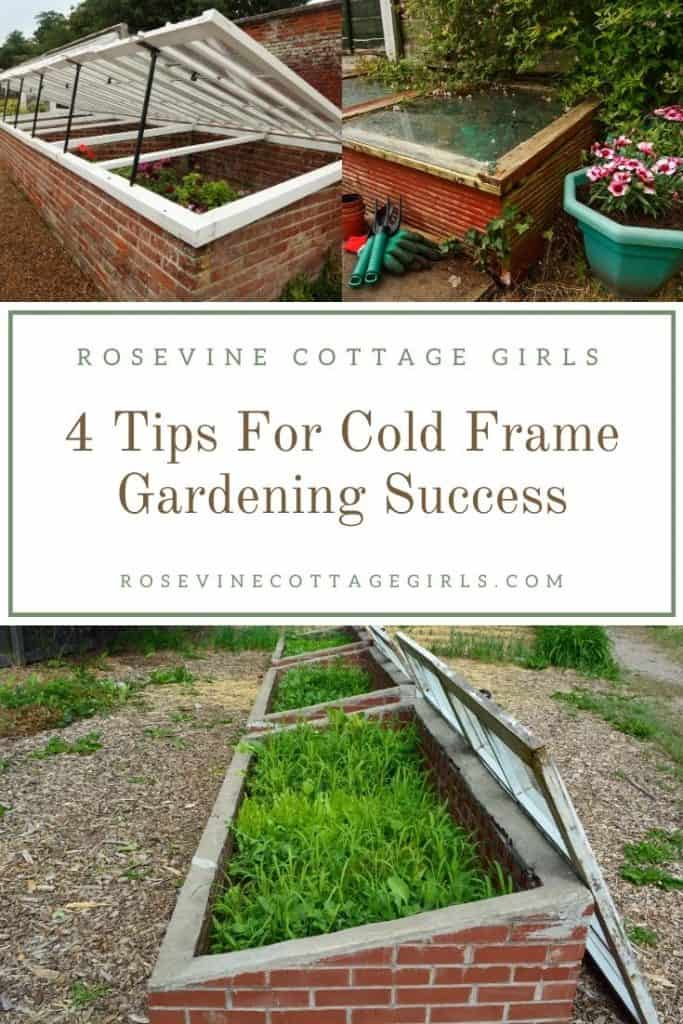 Cold frame garden beds | 4 tips for successful cold frame gardening to extend your growing season