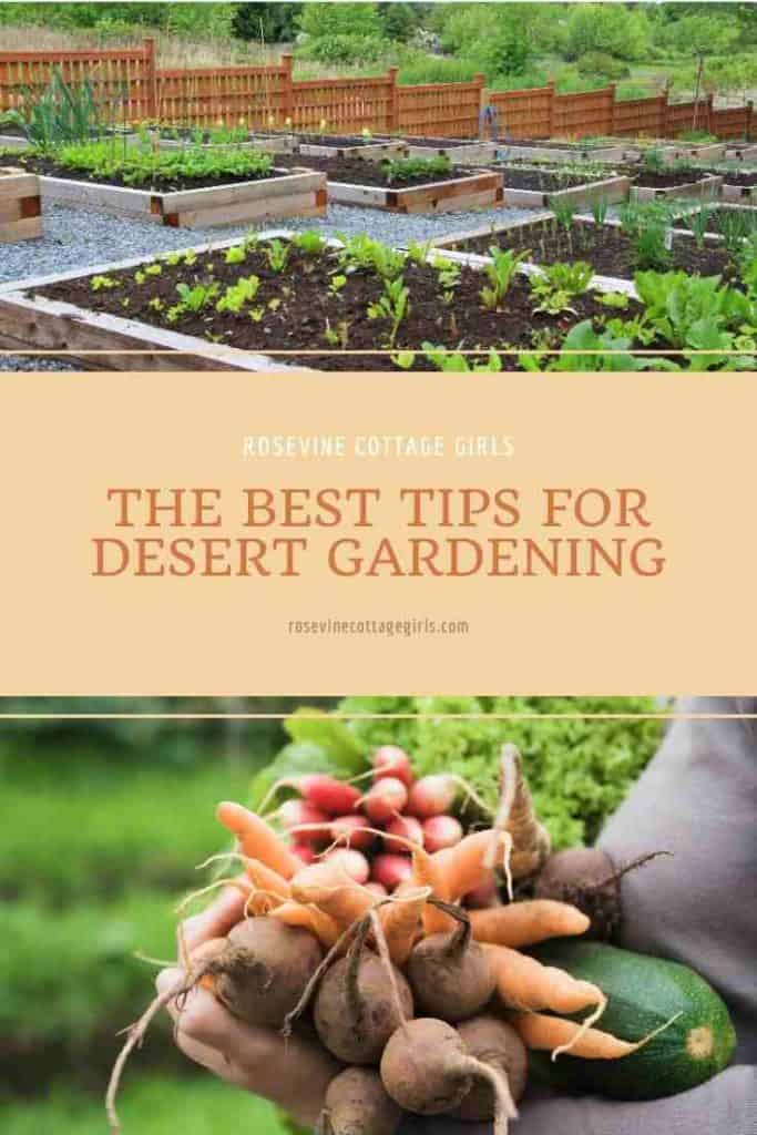 Raised garden beds, and an arm load of vegetables | The Best Tips For Desert Gardening