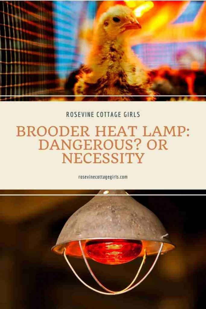 chick and heat lamps | Brooder Heat Lamp: Dangerous? Or Necessity? Everything you need to know about keeping your chicks warm.