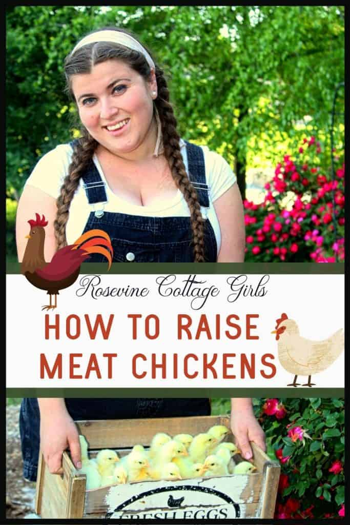 Woman holding box of chicks | How to raise meat birds for beginners