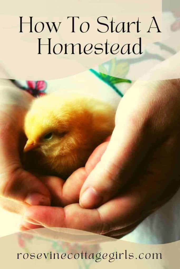 Girl holding a chick   How to start a homestead