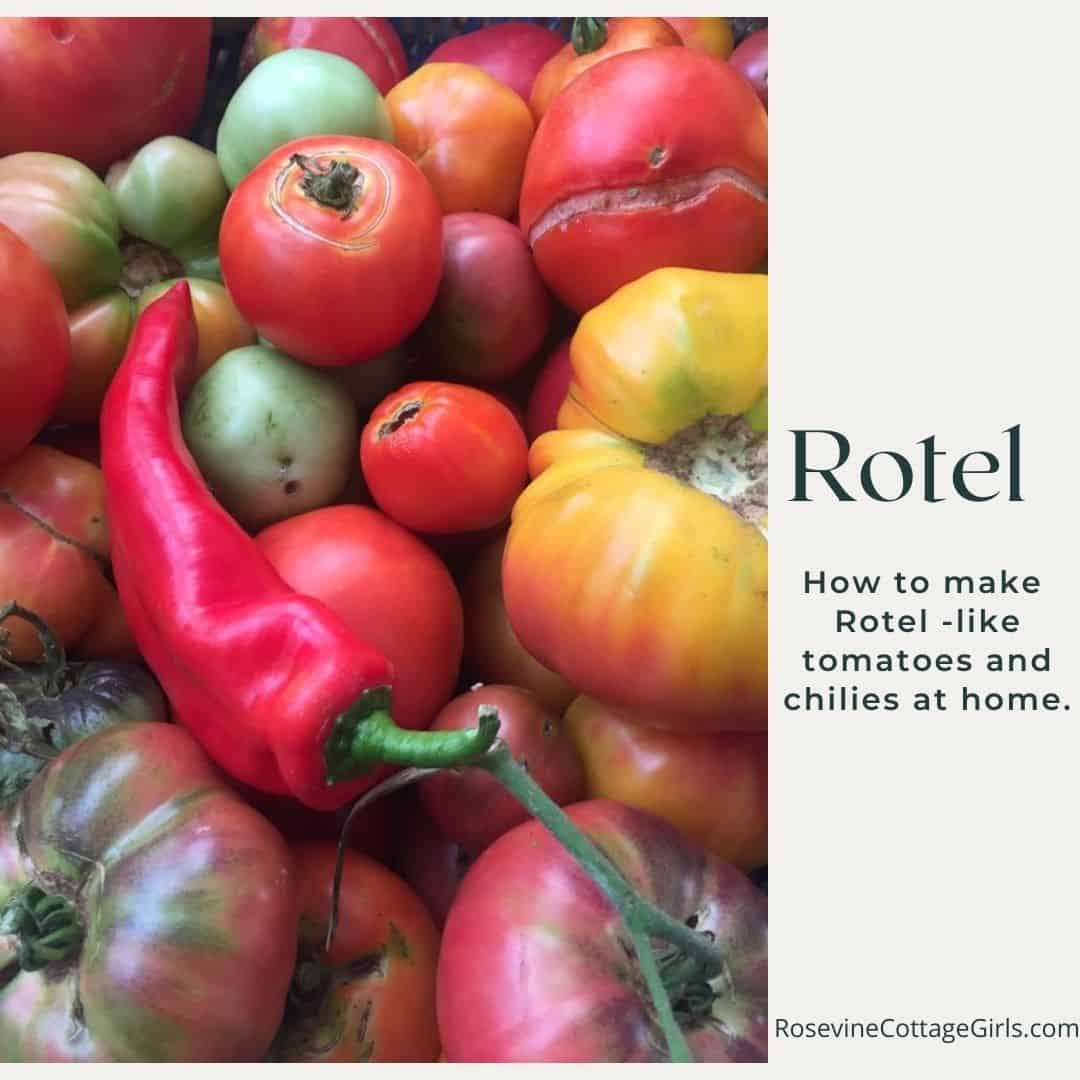 Rotel tomatoes and chilies | photo of tomatoes and chilies