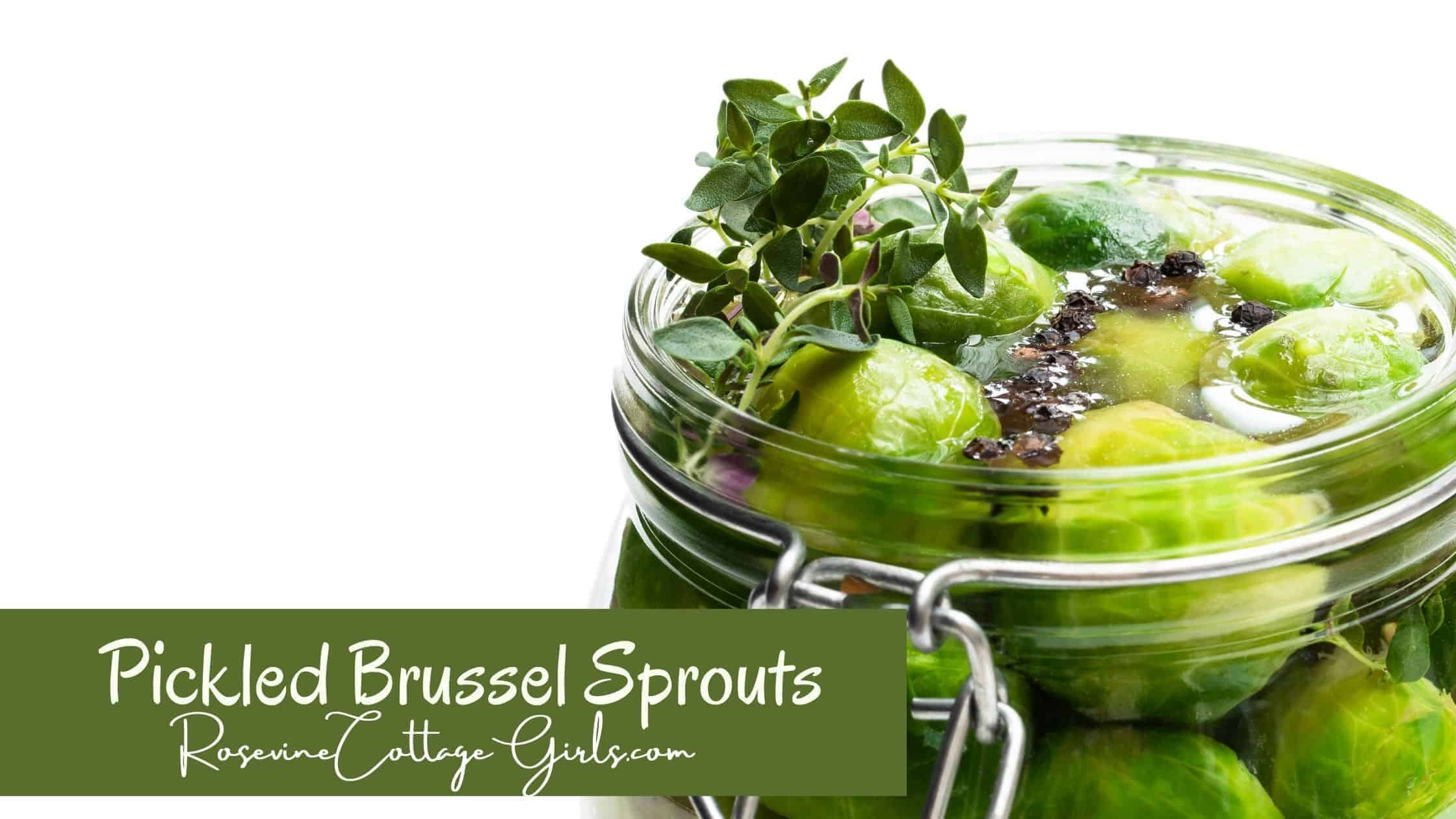 Pickled brussel sprouts | canned pickled brussel sprouts