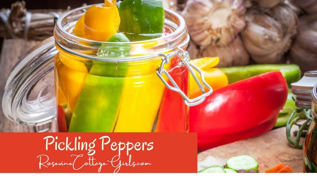 Pickling peppers | jar of pickled peppers